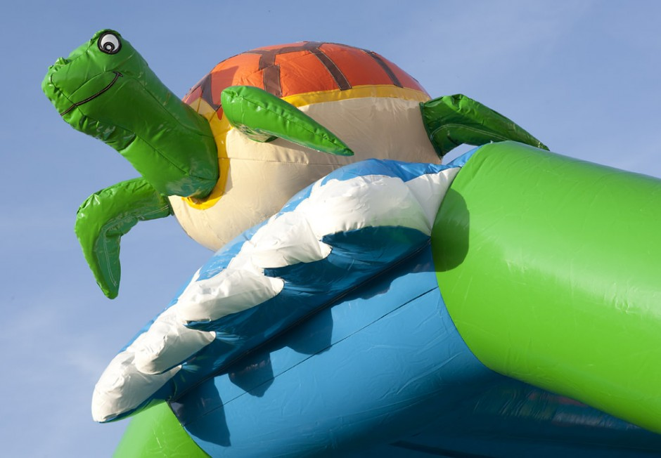 Vanlig Sköldpadda