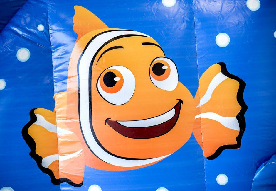 Splashy Clownfisk